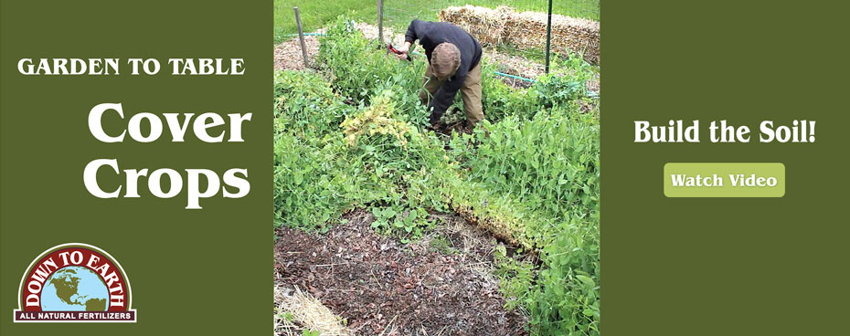 The importance of Cover Crops for the Home Garden
